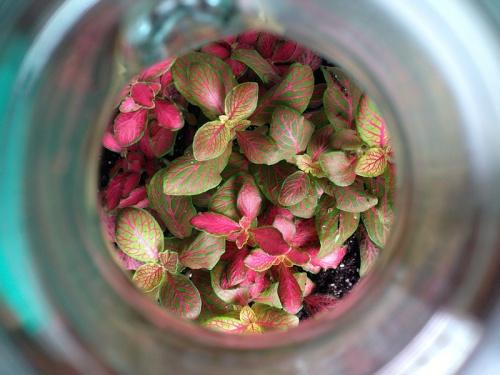 bottle garden plants