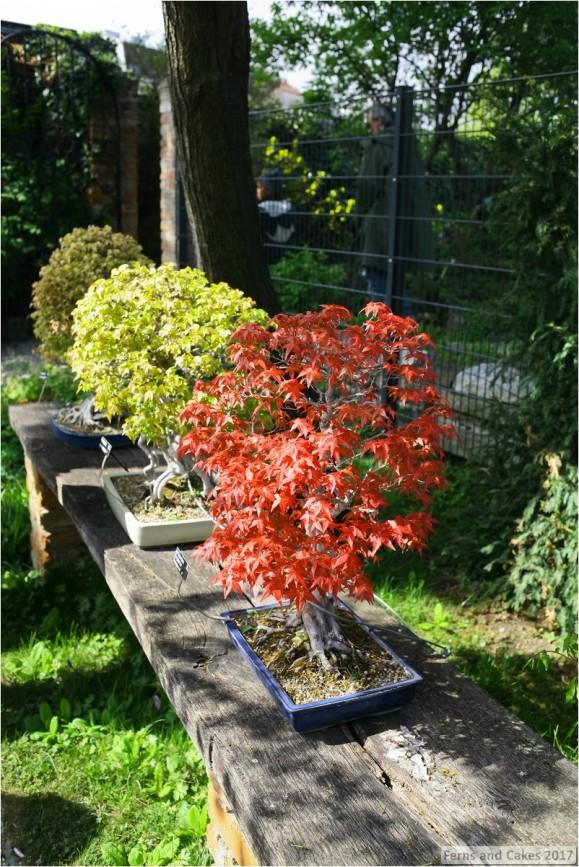 rare plants fairk30